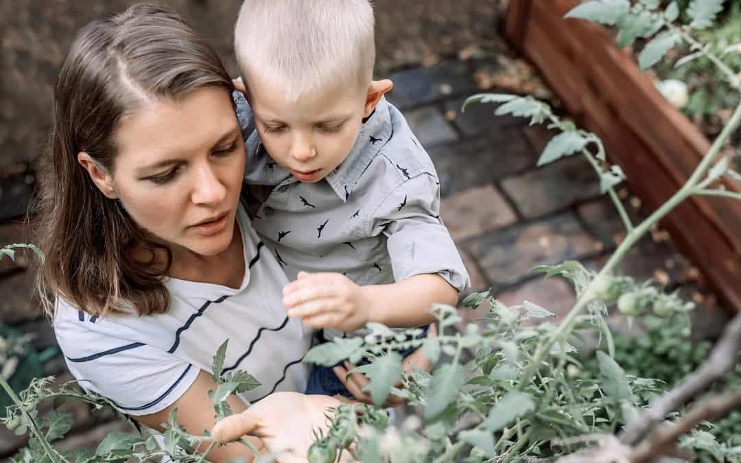 Le pouvoir des plantes et de la phytothérapie pour soigner les petits maux de bébé.